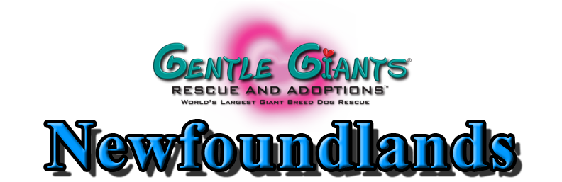 Greyhounds at Gentle Giants Rescue and Adoptions